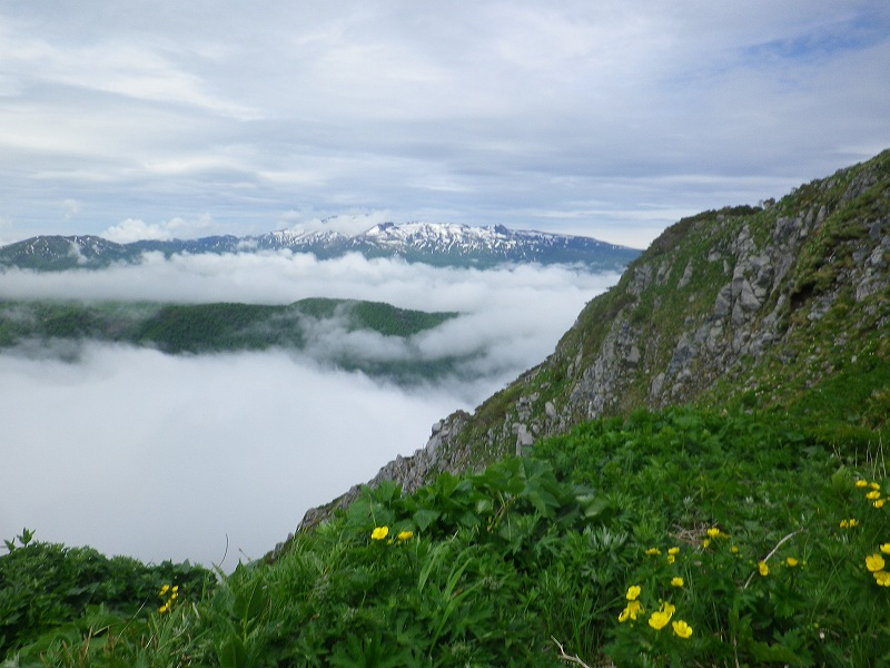 お花の山大平山